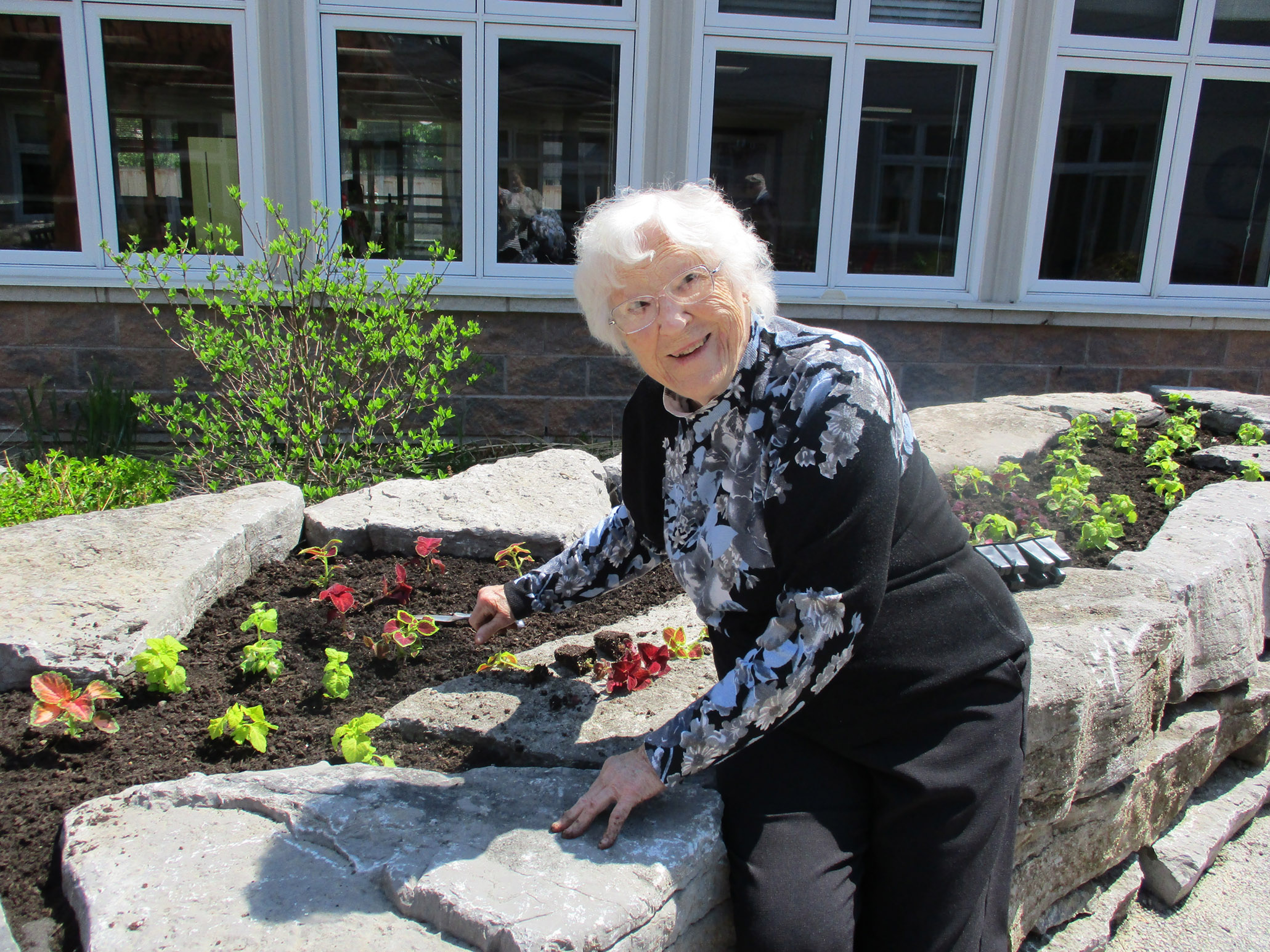 A senior planting flowers in the garden on a beautiful summer day.