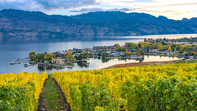 image of vineyard overlooking a subdivision Okanagan Lake Kelowna British Columbia Canada in the fall