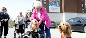 image of Rayna, an 18-month-old therapy dog, took a liking to Gloria Plummer's stuffed pooch during Lincoln Park Retirement Residence's mini walk for dog guides.